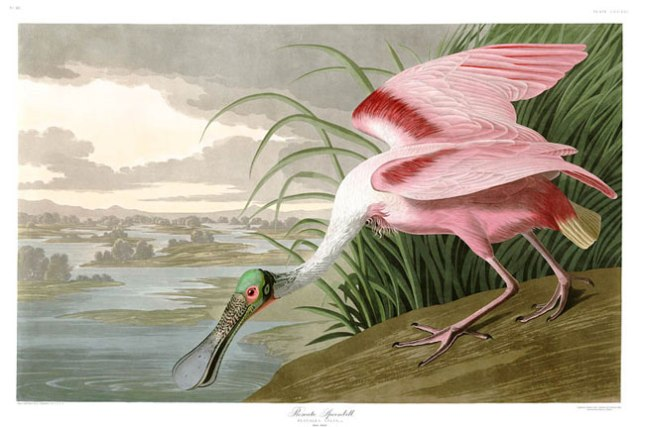 Геннадий Кацов СЛОВОСФЕРА №115 Джон Джеймс Одюбон, «Птицы Америки» (1827—1838)